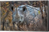 Black Rhinoceros, Etosha National Park, Namibia Fine-Art Print