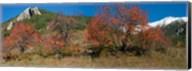 French Riviera Hinterland, Alpes-de-Haute-Provence, Provence-Alpes-Cote d'Azur, France Fine-Art Print
