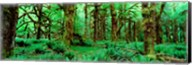 Rain Forest, Olympic National Park, Washington State Fine-Art Print