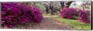 Magnolia Plantation and Gardens, Charleston, South Carolina Fine-Art Print