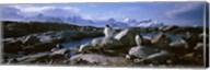 Penguins on Peterman Island Fine-Art Print