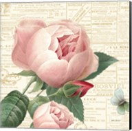 Roses in Paris V Fine-Art Print