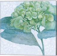 Blue Hydrangea II Fine-Art Print