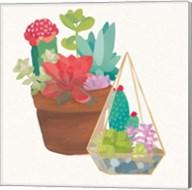 Succulent Garden IV Fine-Art Print
