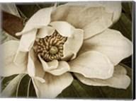 Classic Magnolia I Fine-Art Print