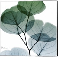 Dull Eucalyptus Mate Fine-Art Print