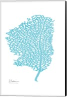 Sea Fan Fine-Art Print