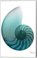 Water Snail 4 Fine-Art Print