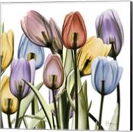 Tulipscape Fine-Art Print