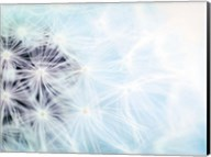 Wishes Blue Fine-Art Print