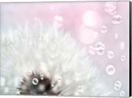 Pink Dandelion Fine-Art Print