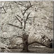 Hamption Magnolia II Fine-Art Print