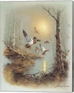 Ducks A Fine-Art Print