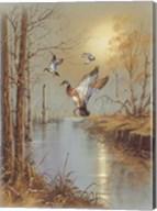Ducks B Fine-Art Print