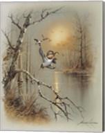 Ducks C Fine-Art Print
