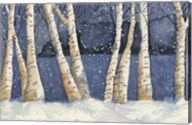 Birch, Snowy Night Fine-Art Print