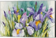 Purple Irises Fine-Art Print