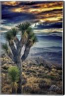 Joshua Tree Sunset Fine-Art Print