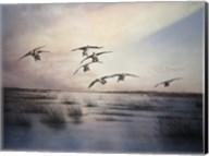 Geese Fine-Art Print