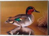 Green Winged Teal Fine-Art Print