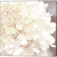Hydrangea Dream I Fine-Art Print