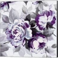 Scent of Roses Plum III Fine-Art Print