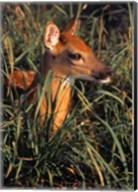 Baby Deer in Grass Fine-Art Print