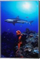 Shark in Crystal Blue Waters Fine-Art Print