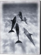 Black and White Dolphins Swimming Fine-Art Print