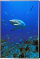 Shark Surrounded by Fish Fine-Art Print