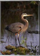 Heron in Lake Fine-Art Print