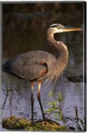 Heron in Lake Fine-Art Print