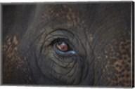 Close Up of Elephant Eye Fine-Art Print