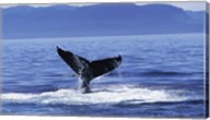 Tail fin of a Humpback Whale in the sea, Alaska, USA Fine-Art Print
