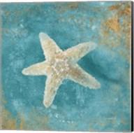 Treasures from the Sea IV Aqua Fine-Art Print