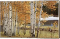 Birch Beauty Fine-Art Print