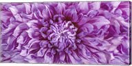Dalia 4 Wet Color Cuadrada Fine-Art Print
