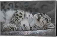 Snow Leopard Reclining Fine-Art Print