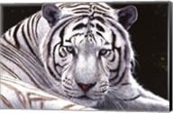 White King Fine-Art Print