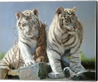 White Tiger Cubs Playing Fine-Art Print