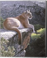 Cougar Country Fine-Art Print