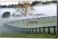 Horses in the Mist #3, Kentucky 08 Fine-Art Print