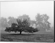 Apple Tree, Southfield, Michigan 85 Fine-Art Print