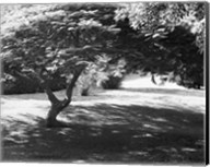 Bermuda Foliage, Bermuda 94 Fine-Art Print