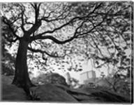 Central Park #1, New York, New York 05 Fine-Art Print