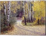 Birch Tree DriveFence & Road, Santa Fe, New Mexico 06 Fine-Art Print