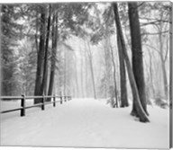 Winters Path Fine-Art Print