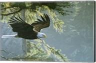 Forest Flight / Eagle Fine-Art Print