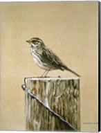 Savannah Sparrow Fine-Art Print