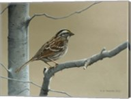 White Throat Sparrow Fine-Art Print